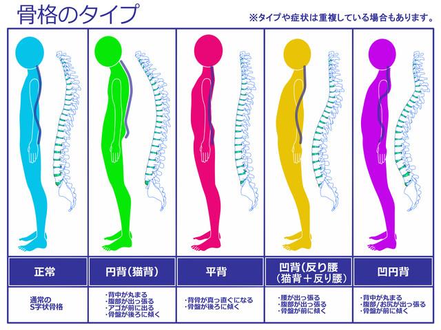 あなたの骨格のタイプは?