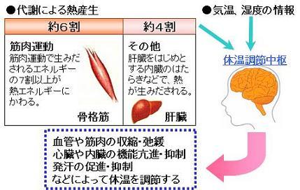 代謝による熱産生