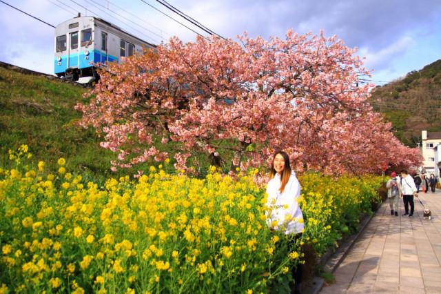 河津桜🌸と菜の花