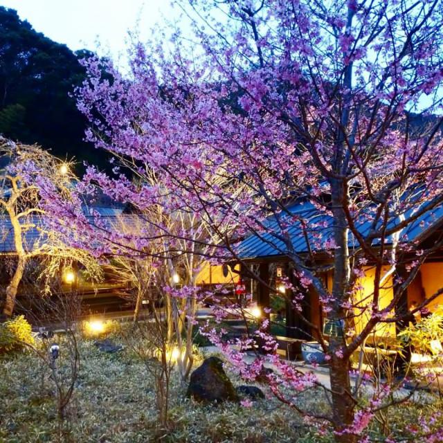 3日目・箱根湯寮さんの開放的な庭園♨